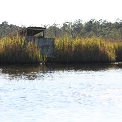 fishing bay WMA scout 6