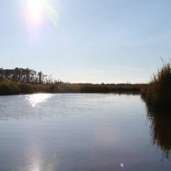 fishing bay WMA scout 7